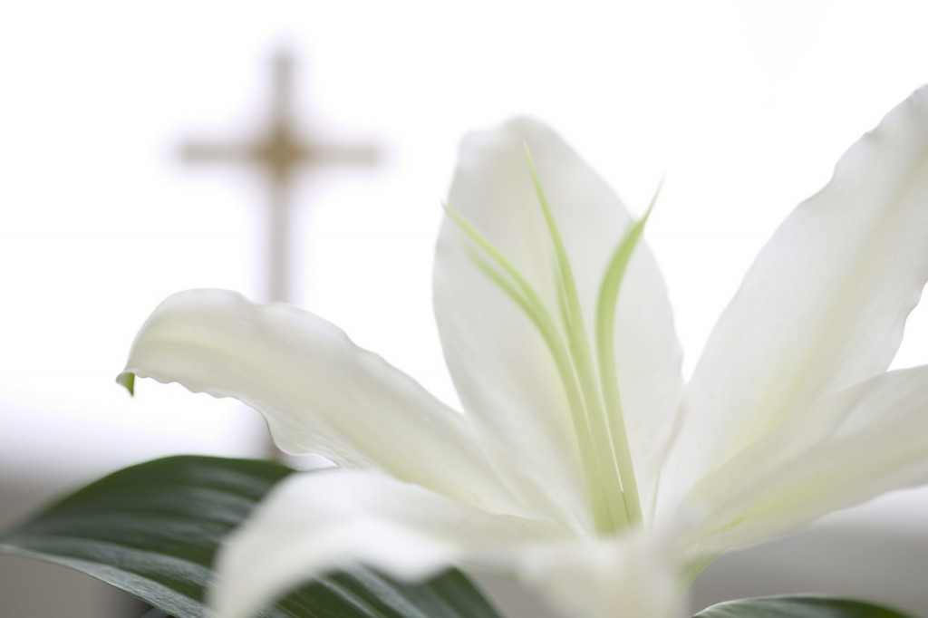 white-lily-and-cross